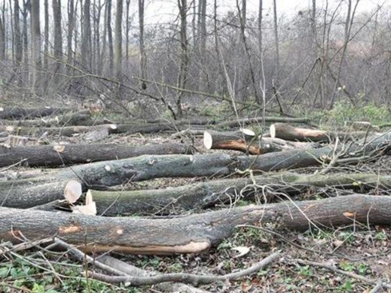 Cyklostezka do Kvasic je kvůli kácení stromů uzavřená